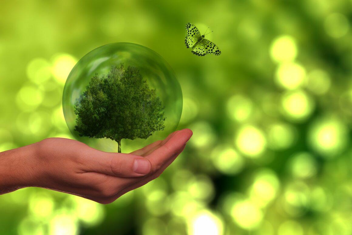 Kasyna dbające o środowisko
